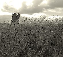 Majesty Beyond the Grass by Ryan Davison Crisp