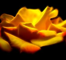 The Yellow Rose  by George Kypreos