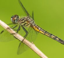 Fly Dragon Sticker