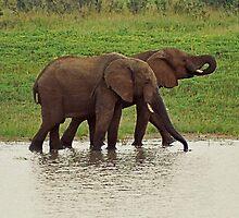 Elephant Dance by Heather Walker