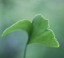 Just green by Maria Ismanah Schulze-Vorberg