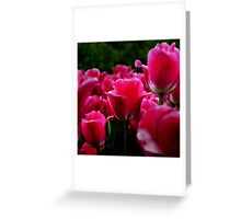 pink beautiful smell flowers Greeting Card