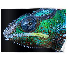 Chameleon in profile Poster