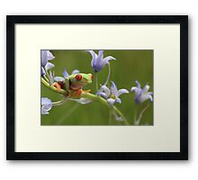 Amongst the bluebells Framed Print