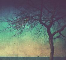 my solace by Angel Warda