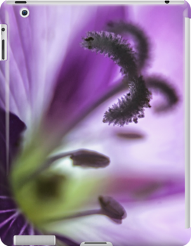 Great Willowherb Wild Flower macro by Vicki Field