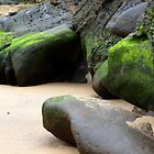 Mossy rocks at Myrtle Beach South Coast by darkie