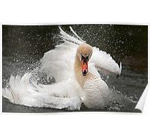 Swan attitude Poster