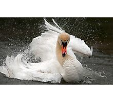 Swan attitude Photographic Print