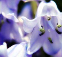 Bluebell Flowers Sticker