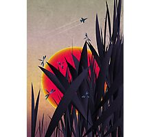 Red Heat (with Dragonflies) Photographic Print