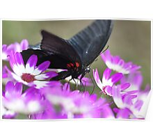 Butterfly with a Purple passion Poster