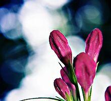 Buds and Bokeh - Weigela flowers by Vicki Field