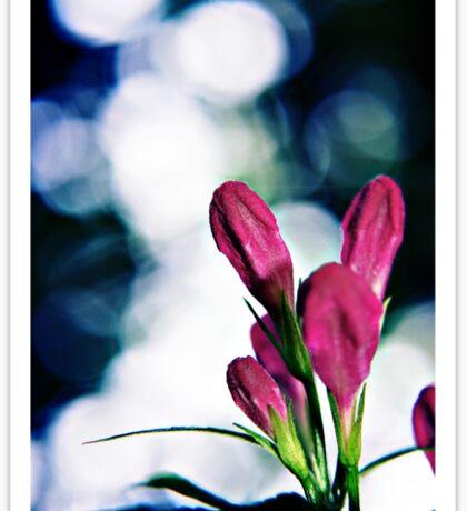 Buds and Bokeh - Weigela flowers Sticker
