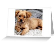 cute dog with priceless look on face Greeting Card