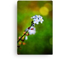 A Forget Me Not flower Canvas Print