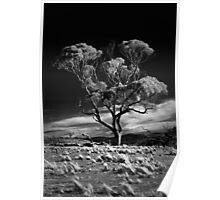 Dark tree Poster