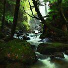 Philosophers Falls - Tarkine Tasmania by Mark Shean