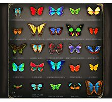 Neon Butterflies in an Old Cardboard Photographic Print
