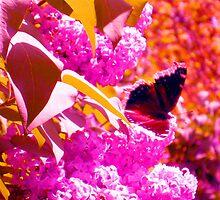 From Flower a Flutter by Michael Degenhardt
