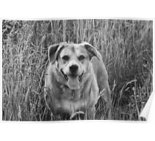Happy Dog in Field Poster