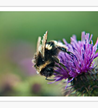 Scruffy Old Bumble Bee macro Sticker