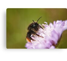 Pollen Covered Bee macro Canvas Print