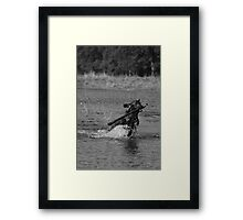 A dogs work 2 Framed Print