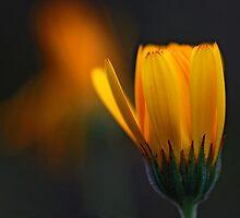 Sharing one light by Lars Basinski