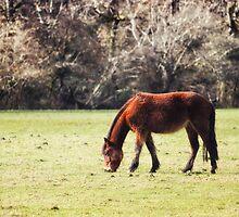 New Forest Pony by Vicki Field