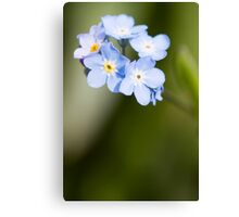 Forget~Me~Not Canvas Print
