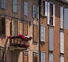 A slice of spring by Davide Ferrari