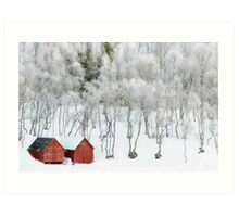 Winter Whiteness Art Print