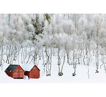 Winter Whiteness Photographic Print