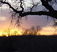 Sunset at Dog Park by photolover08