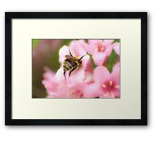 Getting Stuck In Framed Print