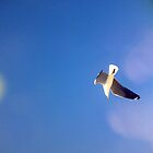 sea gulls by Daniel44