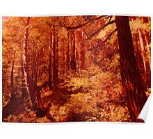Redwood Forest 3, Northern California Poster