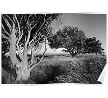 Trees in the tall grass Poster