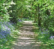 Bluebell Path by Paul Morley