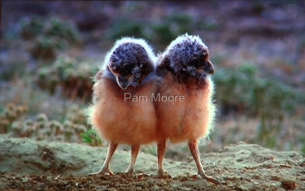 The Baby Chicks by Pam Moore