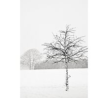 Silent winter Photographic Print