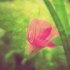 Four Seasons- Spring  by Ashley Christine Valentin