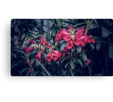 Wow What Are Those Flowers? Canvas Print