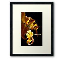 Goldern Ribbon  Framed Print