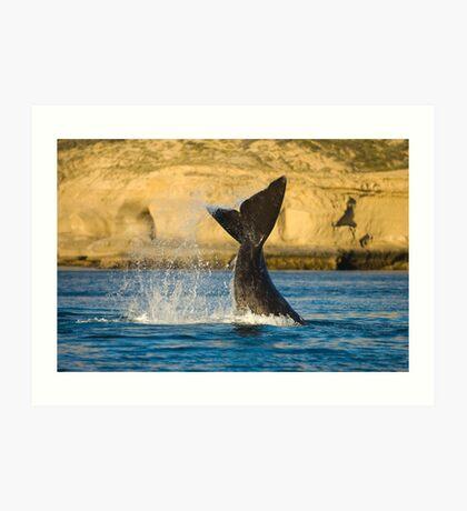Right whale, Peninsula Valdes. Art Print
