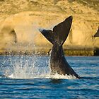 Right whale, Peninsula Valdes. by Pablo Caridad