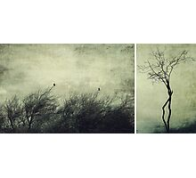 Nature ~ silhouettes Photographic Print