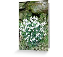 Snowdrops by the Wall Greeting Card