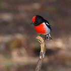 Red-capped Robin by Melva Vivian